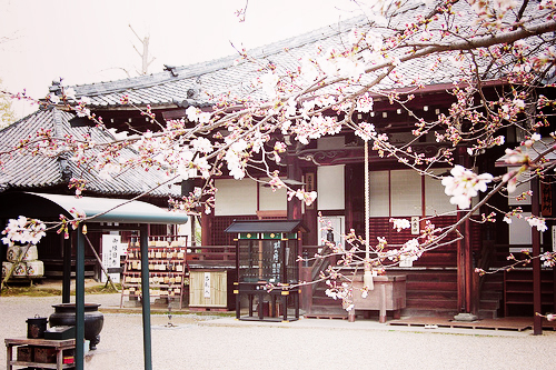 must do while traveling in japan